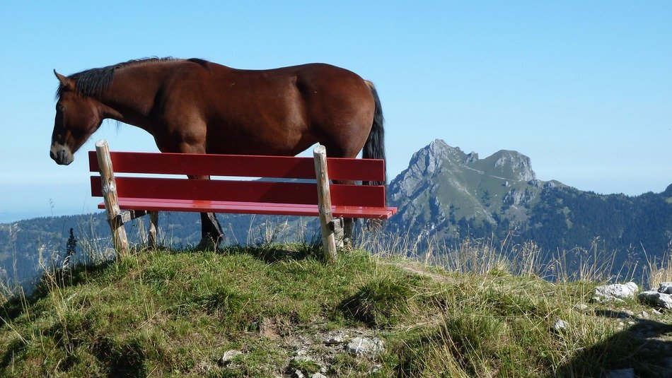 mountain bank with brown horse view