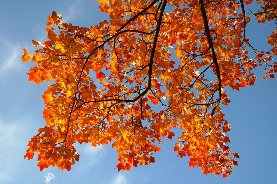 Yellow-red autumnal foliage against the sky