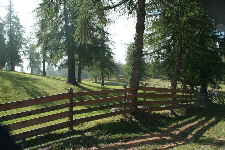 wooden fence in the forest on a sunny day