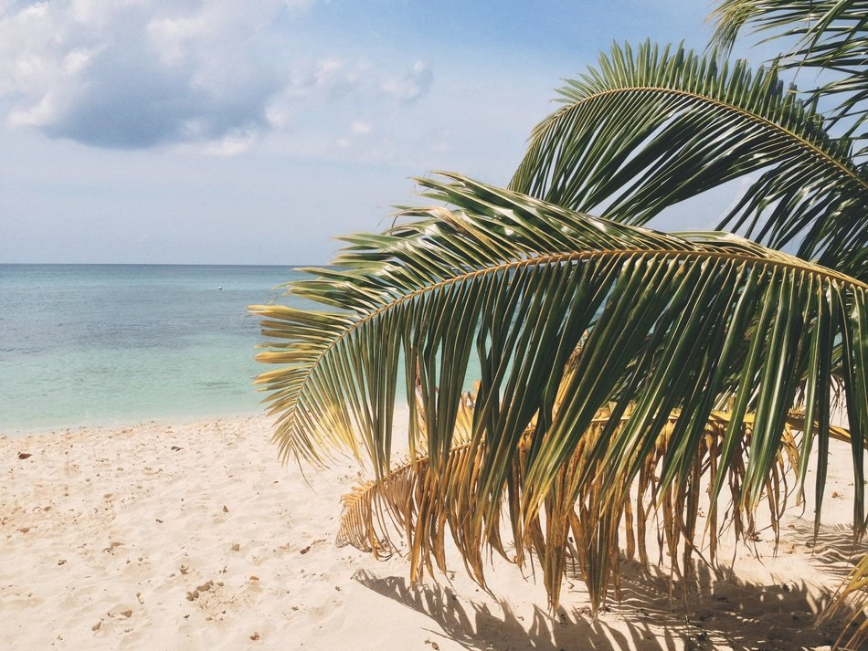 palm tree on a sunny tropical beach