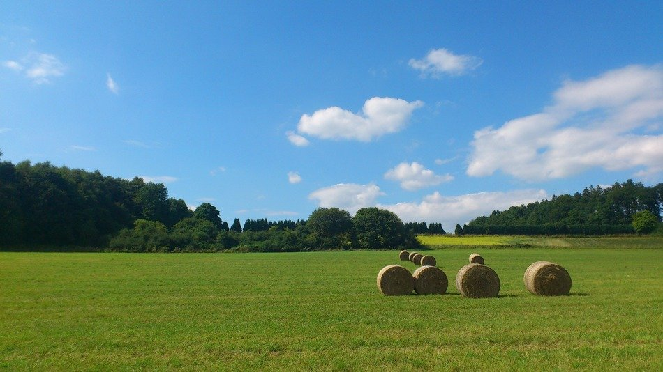 straw bales on the agricultural field