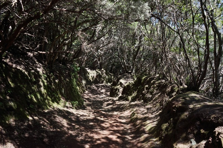 trail path on Tenerife