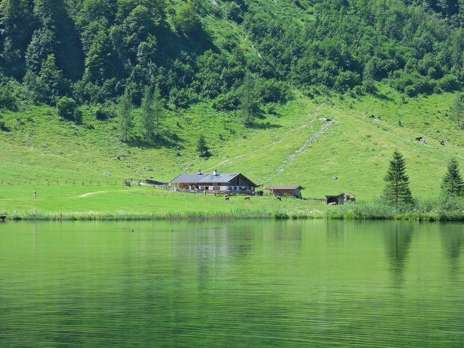 Cabin in a green meadow near the lake