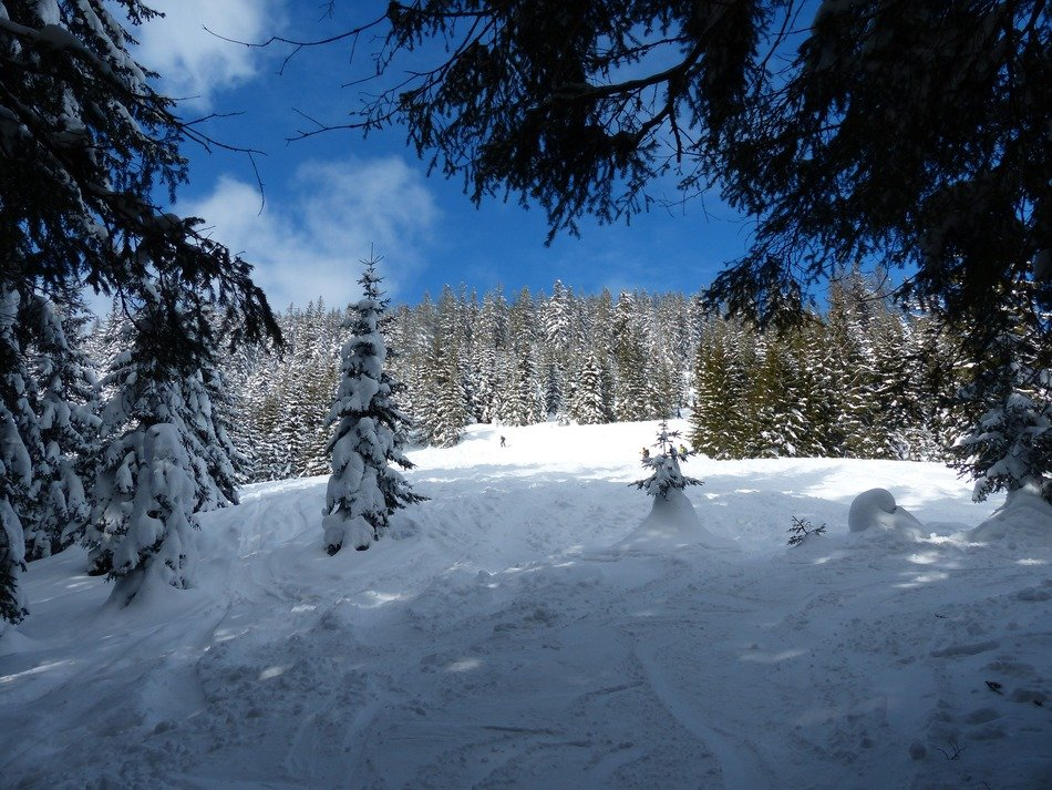 Winter coniferous forest on a sunny day