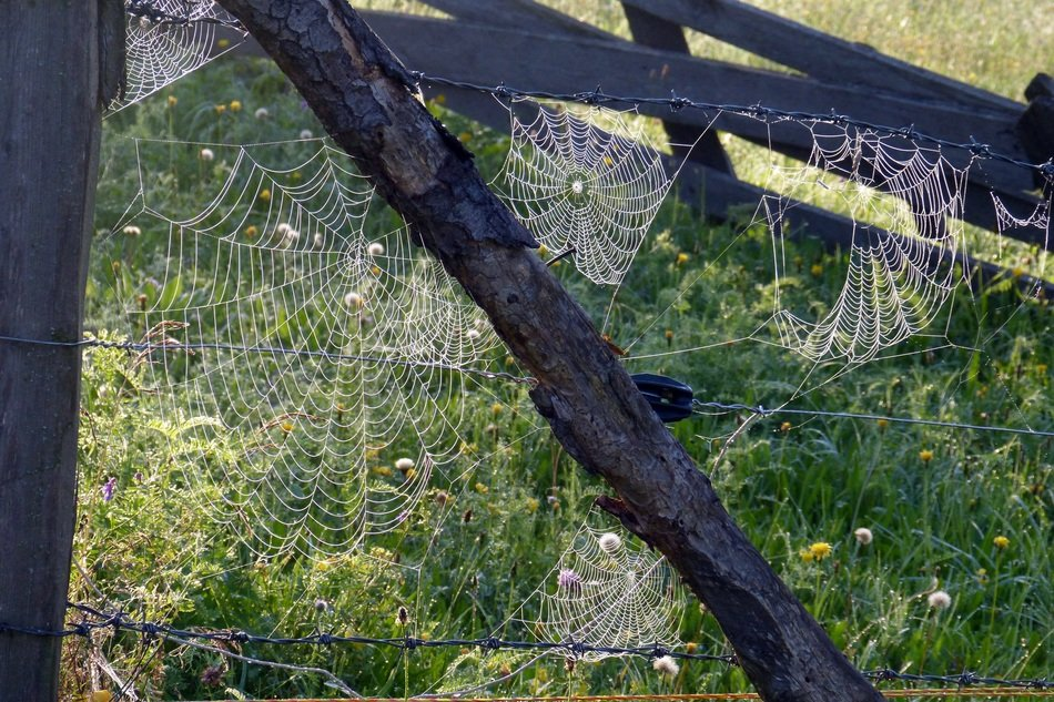 big spider web is on a fence