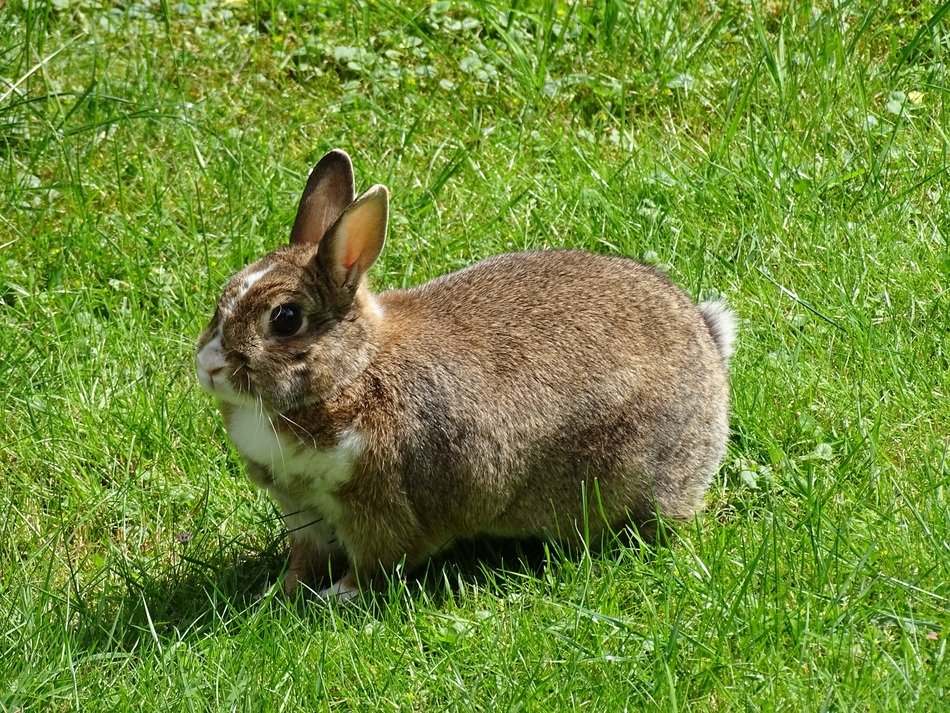 rabbit on a green meadow