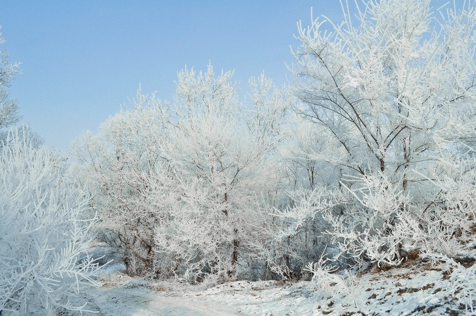 landscape of unbelievably beautiful frosty forest