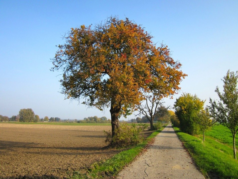 autumn countryside fields road