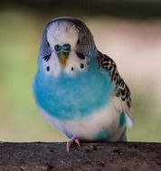 little blue white parrot is sitting on a branch