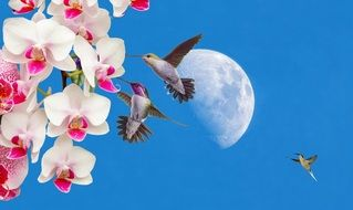 hummingbird among pink orchids against the backdrop of the day moon