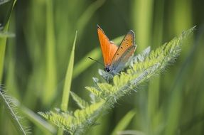 colorful butterfly on the green grass