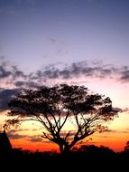 silhouette of a tree on the evening sky