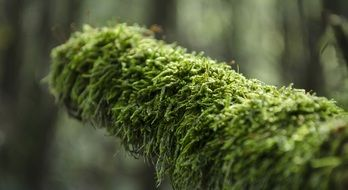 green moss covered tree branch