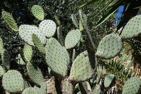 green cactus with thorns