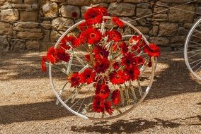 red flowers on a bicycle wheel