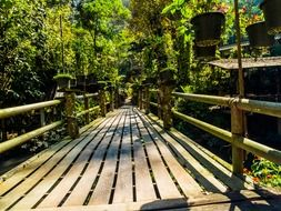 wooden bridge in the green forest