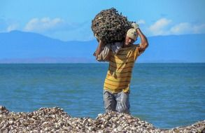 collecting mussels on the ocean coast in venezuela