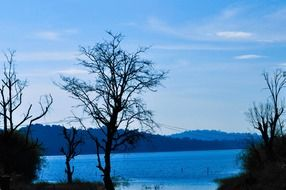 trees near a lake with blue water
