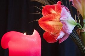 flower over pink candle