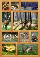 autumn poster in frame, wildlife