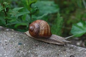 snail in natural environment