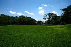 green grass on a meadow in summertime