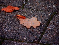 brown oak leaves on paving slabs
