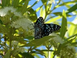 Picture of dotted butterfly