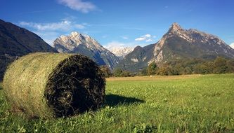hay bale on a meadow