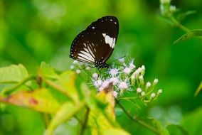 White and black butterfly on a plant