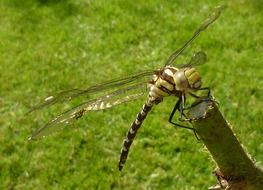 Picture of the big dragonfly