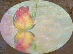 Drawing of a yellow blooming rose in reflection