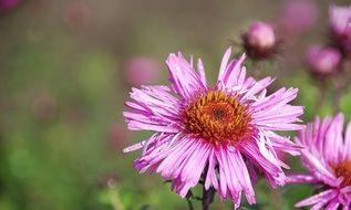 Bloom Pink Summer Flowers