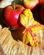 autumn leaf apple