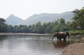 elephants cooling down in the river