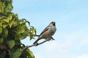 sparrow bird sitting on a tree branch