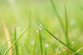 nature straw macro drop rain