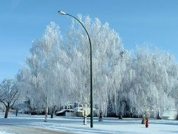 winter view of trees in Canada