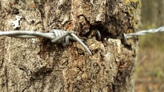 barbed wire on a trunk of a tree