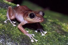 brown frog on a tree trunk
