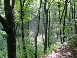 Green forest in Dresden