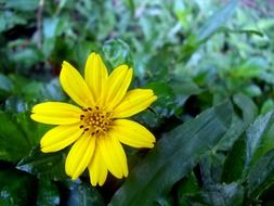 yellow flower among green leaves