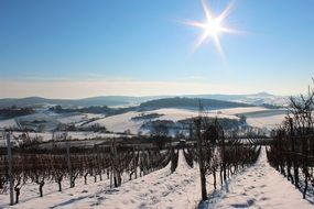 view of the vineyards in winter