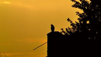 picture of the bird of prey at the sunset