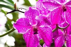 pink orchid flower blossom in the garden