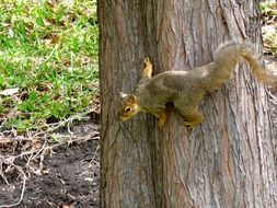 squirrel tree rodent