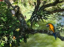 blue macaw arara sitting over the green water