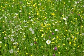 meadow with various wild flowers
