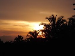 sun at sunset behind palm trees