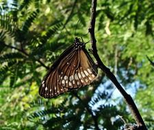 fragile butterfly among green trees